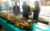 Izložba gljiva, Pušćine, 27. i 28. rujna 2014.
