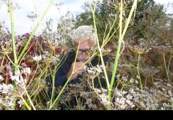 Opojni miris koromača u Nikolinom vrtu