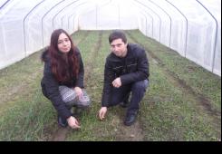 Mladi par se bavi povrtlarstvom: Za Uskrs mladog luka neće nedostajati