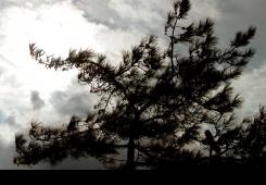 Promjenjiva veljača pokazat će svoje čari u Međimurju