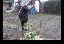 Usred zime vrt Juršićevih pun povrća
