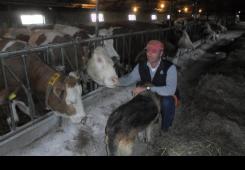 Mladen Novak kravama za bolje raspoloženje i više mlijeka pušta glazbu