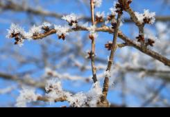 Proglašena elementarna nepogoda mraza za cijelo Međimurje