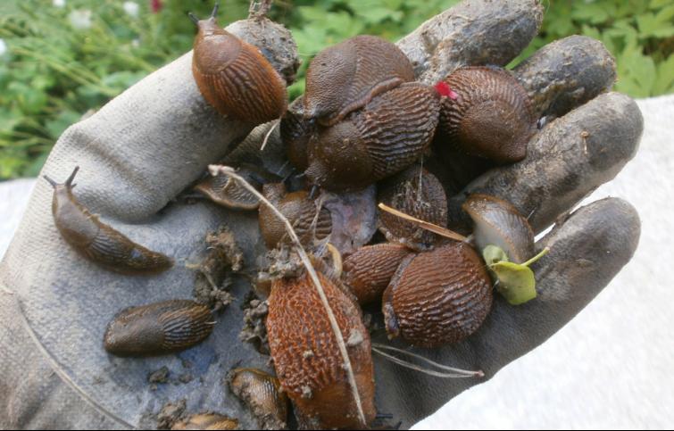 Naučite sve o nametnicima u vrtu i biološkim tehnikama suzbijanja  Međimursk...