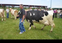 MESAP postaje punoljetan, a vraća se i stočarska izložba
