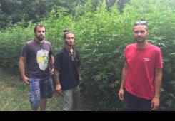Ostali u Međimurju: Izabrali uzgoj industrijske konoplje i češnjaka