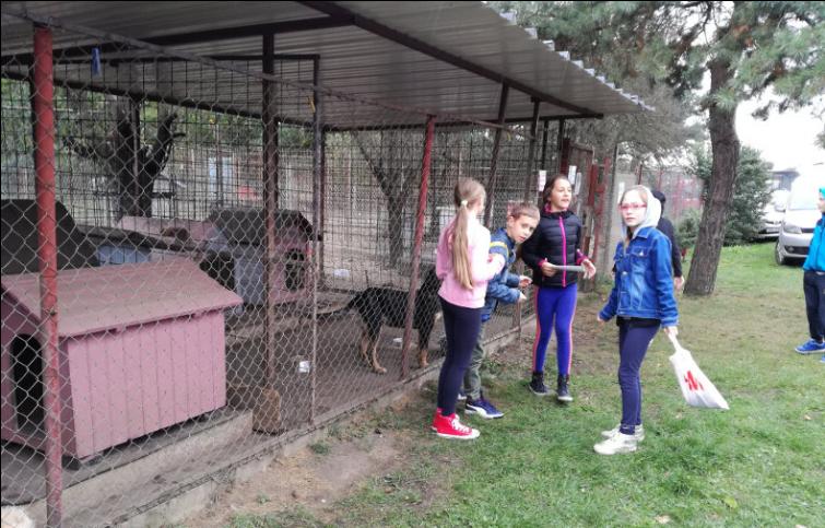 Skloništa, poput onog u Čakovcu, krcata su napuštenim psima