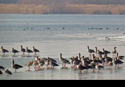 Traje prebrojavanje ptica močvarica - i građani pozvani da se uključe
