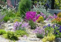 Savjeti kako brinuti za cvijeće preko ljeta da ostane zdravo i lijepo