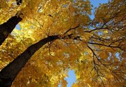 Red kiše, red sunca: U Međimurje se došuljala jesen