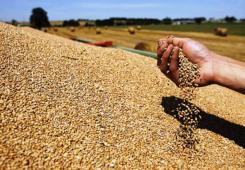 Saznajte sve o ovogodišnjem otkupu žitarica u Čakovečkim mlinovima!