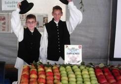 U Sv. Martinu na Muri berba jabuka starinskih sorti