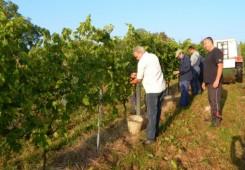 FOTO: Dobra vinogradarska godina, očekuje se kvalitetno vino